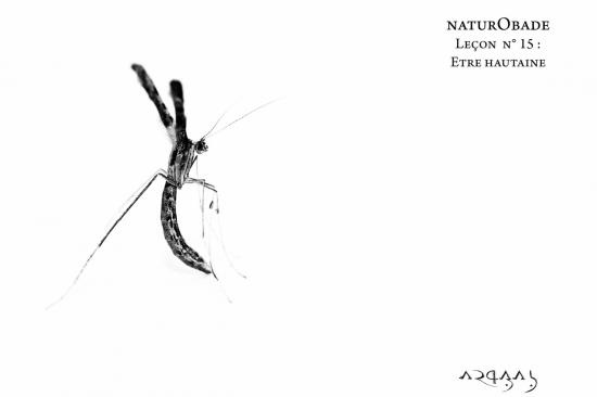 NaturObade L15