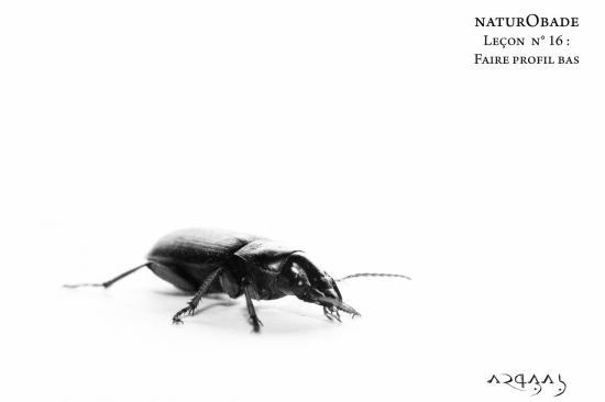 NaturObade L16