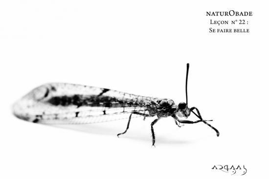 NaturObade L22