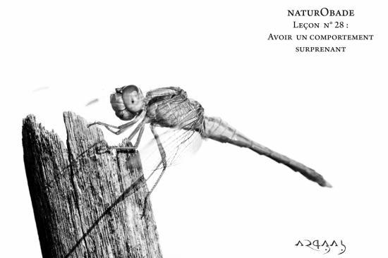 NaturObade L28