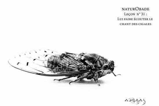 NaturObade L31