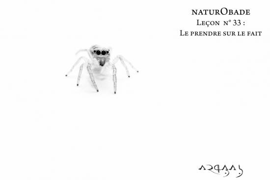 NaturObade L33