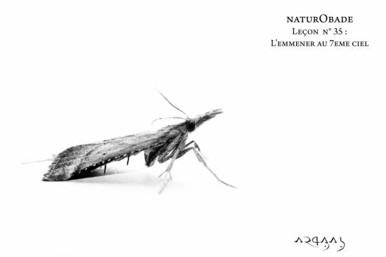 NaturObade L35