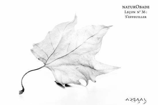 NaturObade L36