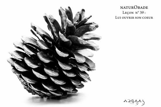 NaturObade L39