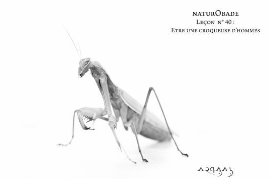 NaturObade L40