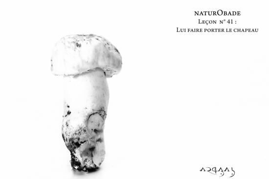 NaturObade L41