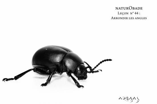NaturObade L44