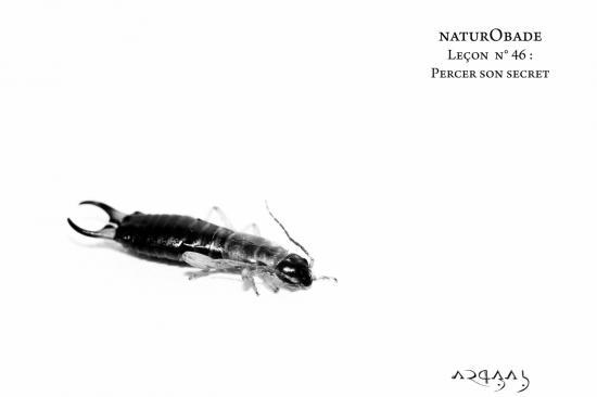 NaturObade L46