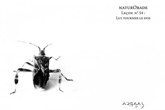 NaturObade L54